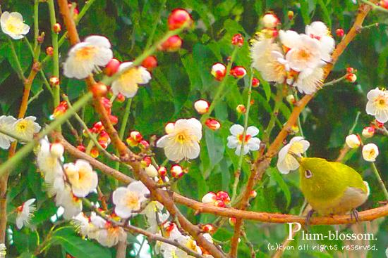 蜷川実花風「春の訪れ」