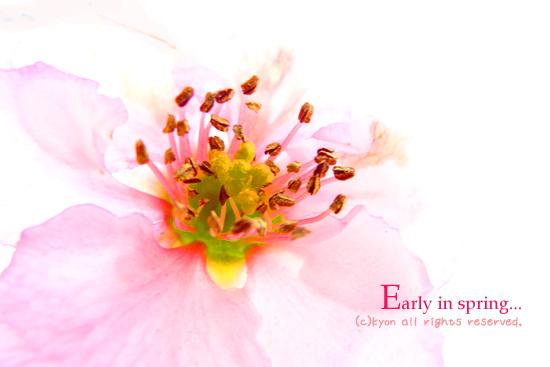 花開きつつある一ヶ月。