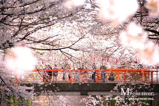 目黒川桜並木★2009 & ドロールカフェ