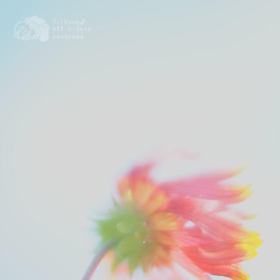 ゆるかわ写真展『 トキメキ 』 でいろいろ思ったこと。