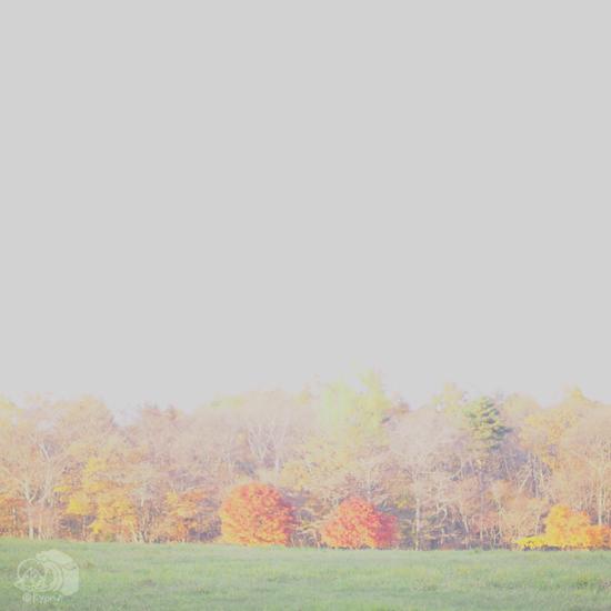 チャイティーラテと秋の清里。