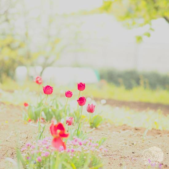 ちいさい春みつけた。