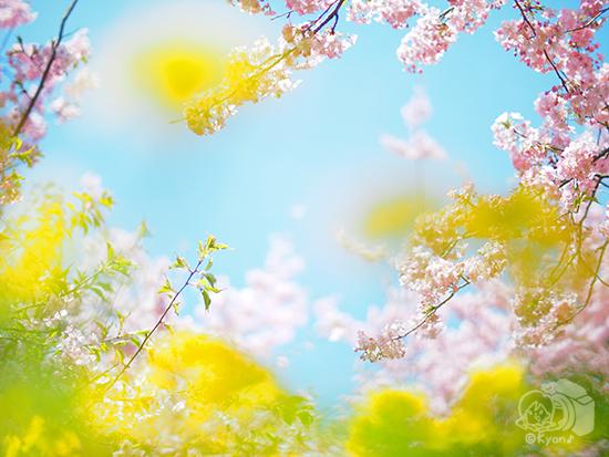 ◯◯の春。