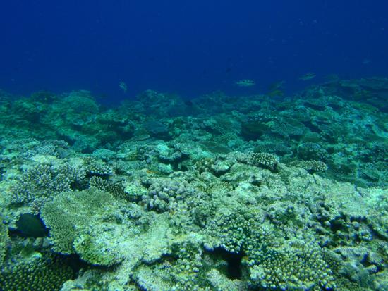 【沖縄離島5日目 マリンメイトさんで体験ダイビング!〜新記載】